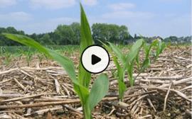 Formation à distance gratuite et ouverte à tous sur l'agroécologie