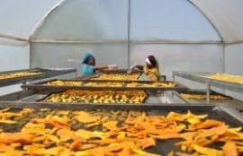 IRIN : Dossier sur le changement climatique et la sécurité alimentaire