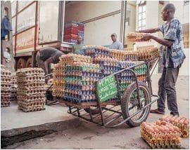 Nourrir l'Afrique : une urgence humanitaire