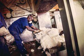 Enquête sur la filière coton OGM au Burkina Faso