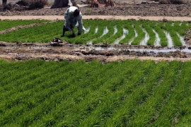 Fertilizing growth: Agricultural inputs and their effects in economic development