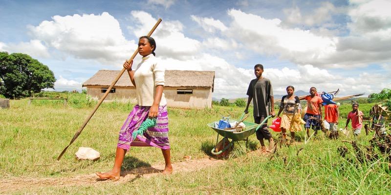 Emploi des jeunes en Afrique : comment favoriser leur insertion dans le secteur agricole ?