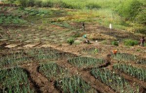 Dossier de l'IRIN: Changement climatique et sécurité alimentaire - Comment s'adapter au réchauffement général de la planète ?