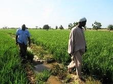 Culture du riz au Niger : résultats du conseil de gestion à l'exploitation familiale