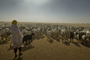 Article : Pourquoi le Tchad est le pays le plus exposé au réchauffement climatique