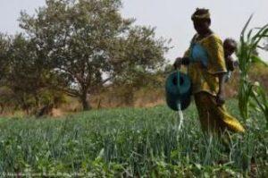 Action contre la Faim: note sur l'agroécologie