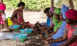 Spore : Gestion professionnelle des coopératives agricoles