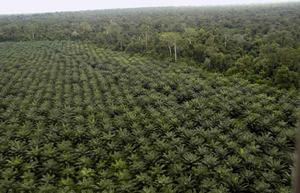 """Nouvel article de GRAIN: """"les communautés perdent leurs terres et leurs sources d'eau dans l'agro-industrie d'OLAM au Gabon"""""""