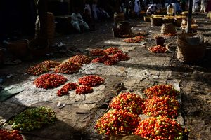 Reportage : Grâce à la tomate