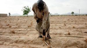 Cameroun: Les paysans du Grand Nord misent sur les céréales et légumineuses en 2017