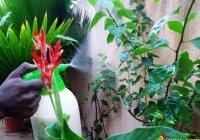Article : l'huile de neem