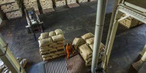 Cacao : la Côte d'Ivoire maintient le prix d'achat garanti aux producteurs à 700 FCFA par kilo