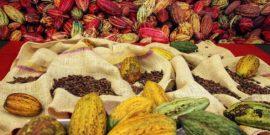 La Côte d'Ivoire enregistre une hausse de 28% de la production de cacao en 2016