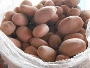 """Fiche """"La culture de la pomme de terre dans la région de Maradi"""""""