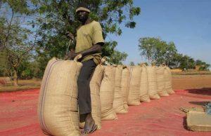 Rapport « État de l'Agriculture en Afrique » : Un marché alimentaire de 1000 milliards de dollars