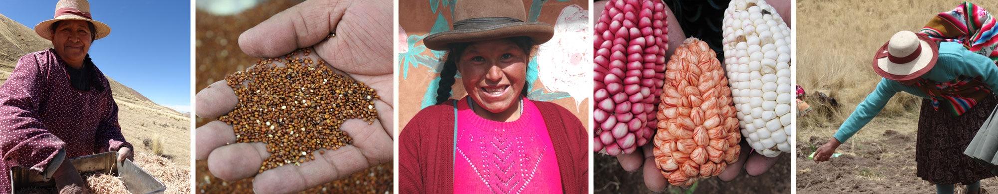 Au Pérou, 1 habitant sur 2 souffre de faim en milieu rural : SOS Faim Belgique appui des coopératives locales pour changer la donne !