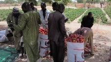 Restitution des résultats 2017 du Conseil de gestion aux producteurs de poivron de Gourgia et Laouni