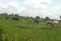 Changements climatiques autour du lac Bagré : la résilience des agropasteurs face aux recompositions territoriales