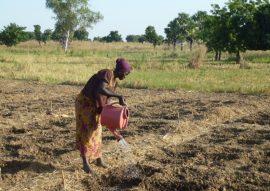 Atelier : Démontrer l'efficacité des pratiques agroécologiques dans les pays du Sud