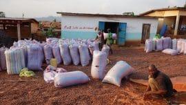 La fraude à la certification gangrène la filière cacao en Côte d'Ivoire