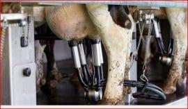Comment l'UE exporte sa crise du lait vers l'Afrique