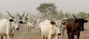 Nigeria's conflict is a result of environmental devastation across West Africa