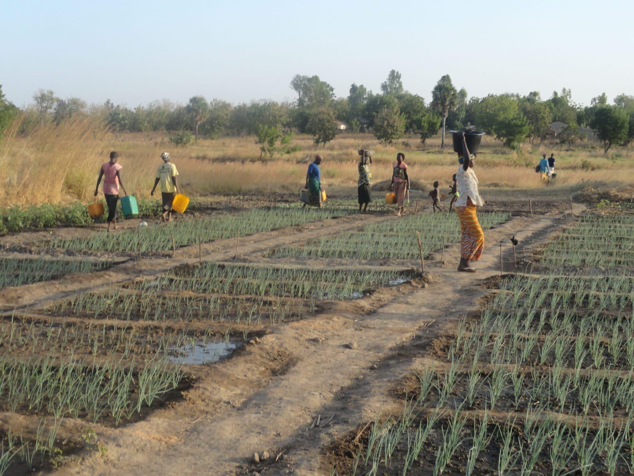Femmes rurales au Nord Togo, AVSF  entend intensifier leur production à travers l'agroécologie