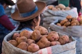 Accord de libre-échange (ALE) UE-Colombie/Pérou/Equateur : SOS Faim Belgique s'oppose à la ratification