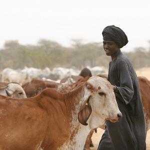 Inscrire dans la durée les changements initiés : appui à la structuration des exploitations familiales d'élevage au Sénégal