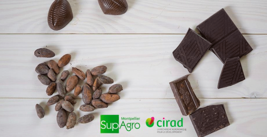 Séminaire : Les nouveaux enjeux de la filière cacao