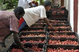 Marchés du commerce équitable : AVSF accompagne les producteurs malgaches dans la commercialisation de leur production sur ces marchés