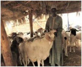 Note : Visite d'un professionnel de l'embouche ovine à Kilakam