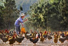 Rapport: Jeunesse et agriculture familiale