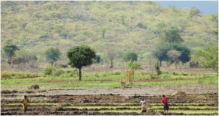 Rapport : Les politiques foncières en Tanzanie, entre promotion de l'investissement et omniprésence de l'Etat