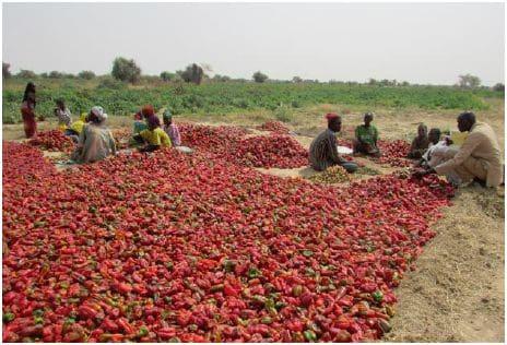Evolution du prix de poivron rouge 2015-2018 sur le marché de Diffa