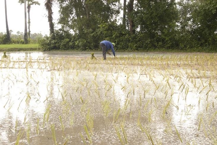 Au Cambodge, pour pallier au gaspillage d'aliments, AVSF construit des greniers collectifs à riz