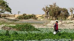 Rapport : Contractualiser avec les agriculteurs en Afrique