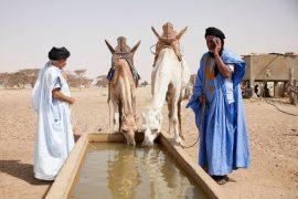 """Article """"Couloirs de transhumance : les éleveurs mauritaniens traversent la sécheresse"""""""