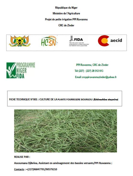 Fiche technique : culture de la plante fourragère bourgou (Echinochloa stagnina)