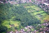Article: Palmier à huile - peu de terres en Afrique peuvent concilier rendement et protection des primates