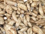 Fiche technico-économique : Culture de la patate douce en saison sèche-froide