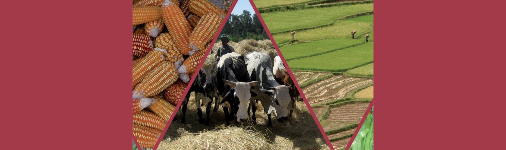 Revue Cahiers Agricultures : Les agricultures face au changement climatique