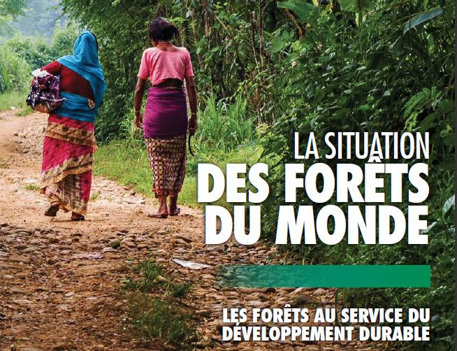 Rapport: La situation des forêts du Monde, édition 2018