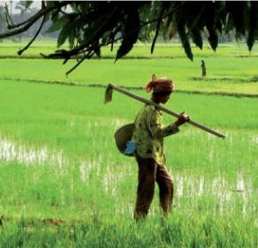 Article: l'avenir des agricultures paysannes face aux nouvelles pressions sur la terre