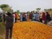Fiche technique de la nouvelle variété hybride de maïs de l'INRAN