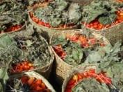 Note RECA: Evolution du prix de gros de la tomate sur trois ans au marché de Niamey Djémadjé