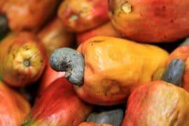 Capitalisation : La filière anacarde en Côte d'Ivoire
