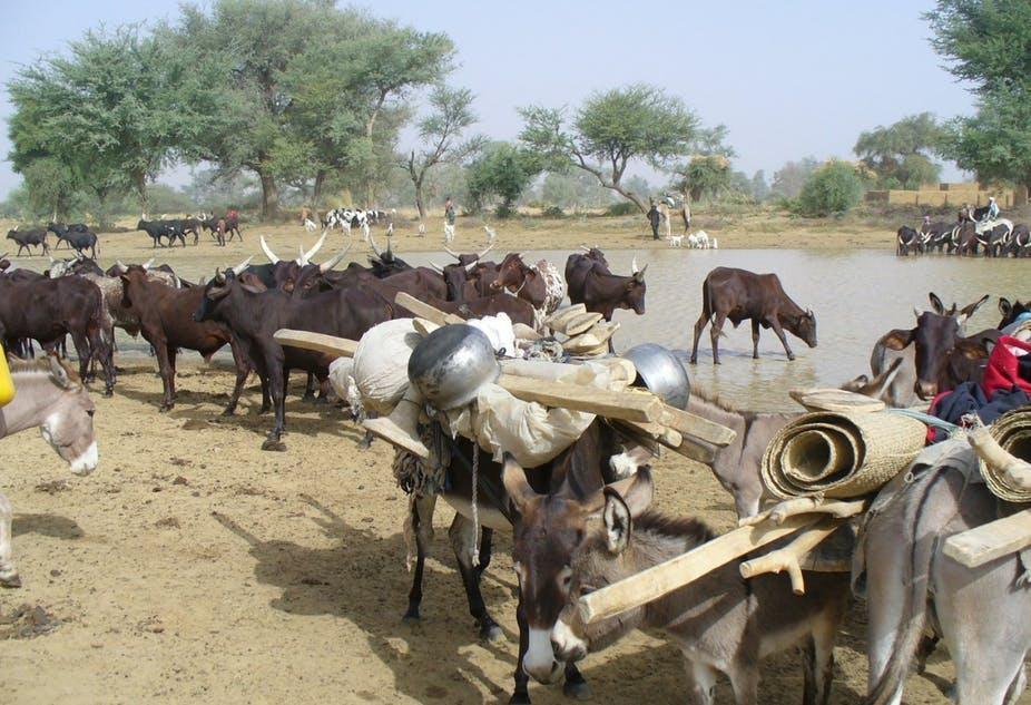 Article : L'élevage pastoral pour s'adapter au changement climatique dans le Sahel