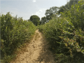 Pratiques des haies vives au Niger (régions de Maradi et Zinder)