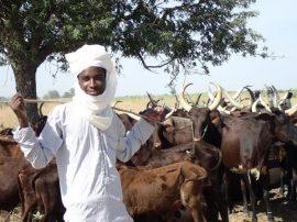 Reportage : Les Peuls M'Bororo du Tchad face aux changements climatiques